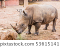 Big rhino in the zoo side view photo. 53615141