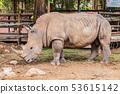 Big rhino in the zoo side view photo. 53615142