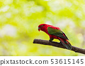 Beautiful colorful Pair Lovebirds parrots on 53615145