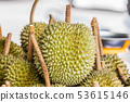 Fresh durian fruit from the durian garden for sale 53615146