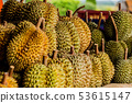 Fresh durian fruit from the durian garden for sale 53615147
