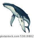 Humpback whale realistic illustration isolated. 53618862