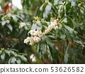 White little flowers 53626582