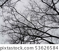 Cloudy sky and dead tree 53626584