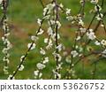 White flower 53626752
