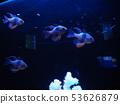 fish 53626879