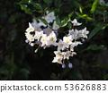 White flower 53626883