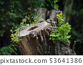 Cut tree in a natural park 53641386