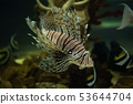 Fish is kind of cichlids swimming in water 53644704