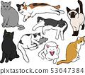 여러가지 고양이 포즈 세트 53647384