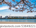 sakura flower with rainbow bridge in Odaiba, 53649221