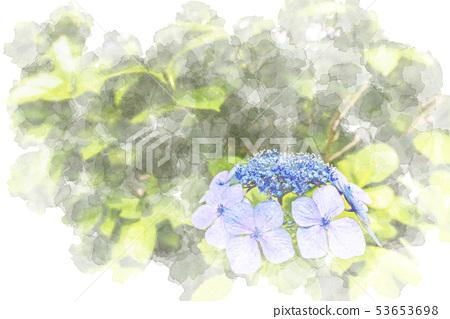 Hydrangea watercolor style 53653698