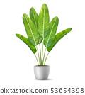 Banana tree leaves in flower pot. 53654398