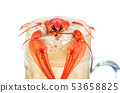 crawfish with beer isolated on white background 53658825