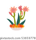 Spring Amaryllis Flowers in Flowerpot, Beautiful Potted Plant Vector Illustration 53659778