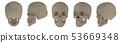 3d rendering illustration of skull 53669348