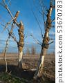 Dead trees. 53670783