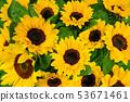 Sunflower background. Blossom yellow flower 53671461