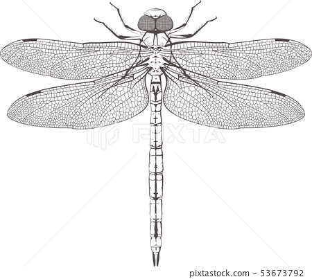large symmetrical dragonfly 53673792