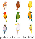 Little Birds Set, Amadin, Sparrow, Canary, Parrot, Cockatoo, Cute Home Pets Vector Illustration 53674061