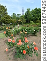 玫瑰園 53674425