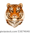 Tiger portrait, colorful illustration 53674646