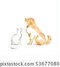 골든 리트리버와 흰색 고양이 소재 53677080
