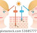 紫外线皮肤结构女人 53685777