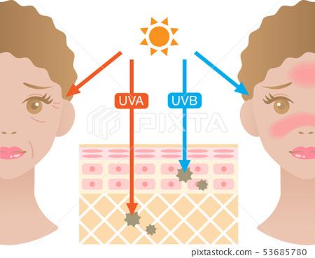 紫外线皮肤结构女人 53685780