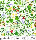 Wild herbs, flowers and berries pattern 53686759