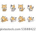 애완견과 고양이 53688422