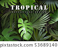 Tropical Background with Jungle Plants 53689140