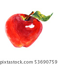 Watercolor apple 53690759