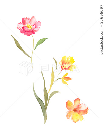 Colorful watercolor flowers 53696697