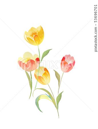 色彩豐富的水彩花卉 53696701