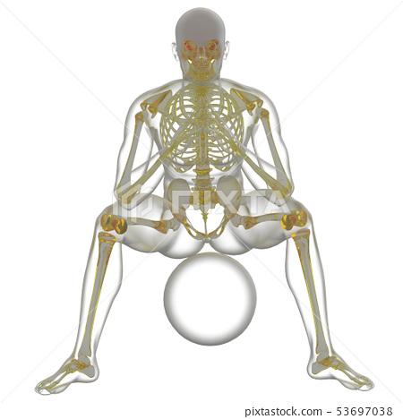 3d rendering of skeleton 53697038