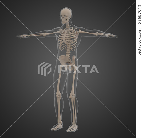 3d rendering of skeleton 53697048