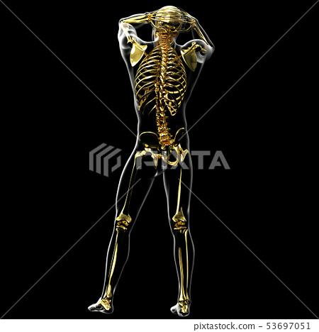 3d rendering of skeleton 53697051