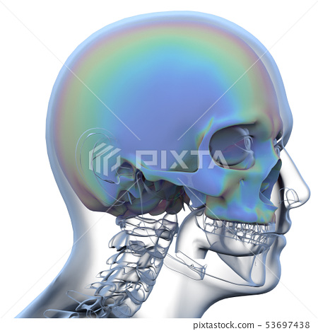 3d rendering of skull 53697438