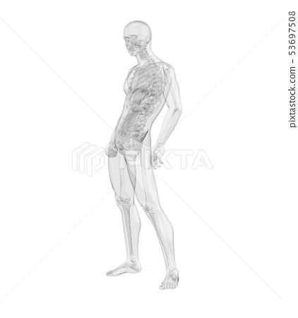 3d rendering of skeleton 53697508