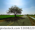 The tree is isolated from the sun at noon. There 53698220
