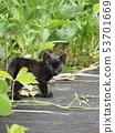 고양이 · 도둑 고양이 53701669