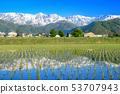 Hakuba Miyama reflected in the water mirror of the paddy field before rice planting 53707943