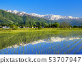 Hakuba Miyama reflected in the water mirror of the paddy field before rice planting 53707947