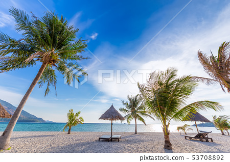 Beach chairs,umbrella and palms on beautiful beach 53708892