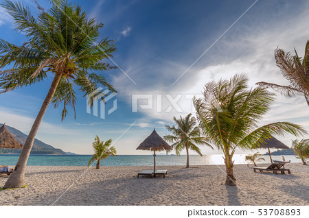 Beach chairs,umbrella and palms on beautiful beach 53708893