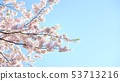 Blue sky and cherry blossoms 16: 9 53713216
