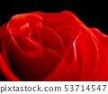 Beautiful single red rose 53714547