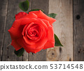 Beautiful red rose on a table 53714548