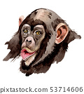 Exotic monkey wild animal in a watercolor style isolated. Aquarelle wild animal for background. 53714606